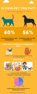 Is Your Pet Too Fat infographic with statistics and solutions