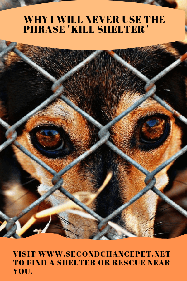 Dog Looking Out from behind a chain link fence