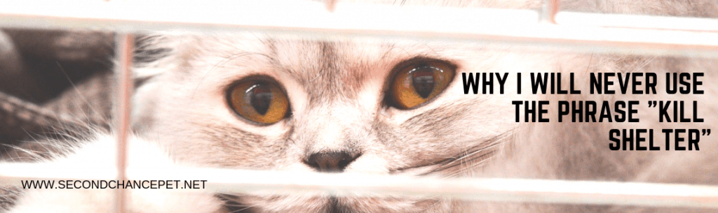 Cat behind a fence at an animal shelter