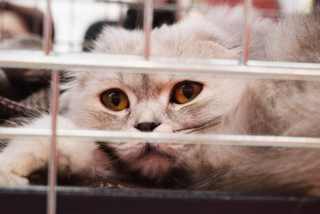 cat looking through a shelter cage