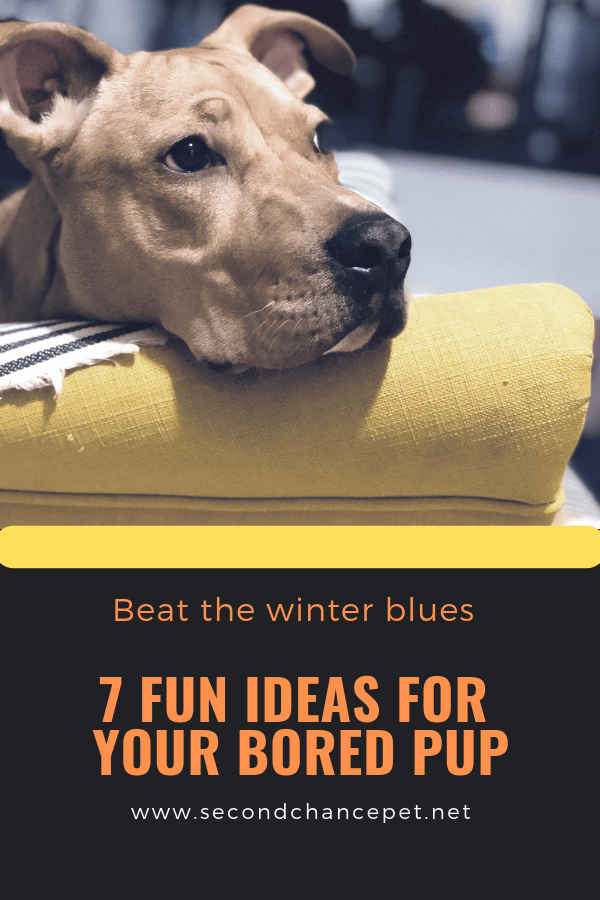 7 Winter Boredom Busters for your dog