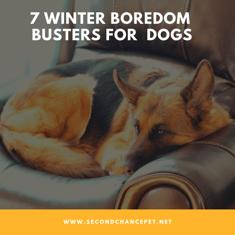 7 WINTER BOREDOM BUSTERS FOR DOGS