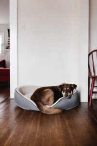 BLACK AND BROWN LARGE DOG CURLED ON PET BED