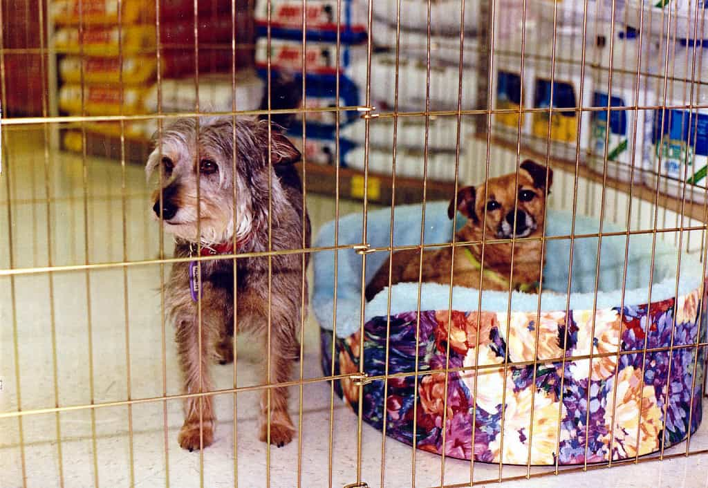 two dogs behind fence with bed in pet store
