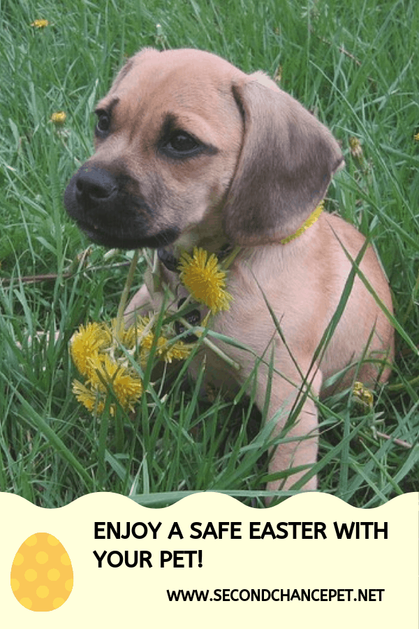 Puppy on grass with dandelions