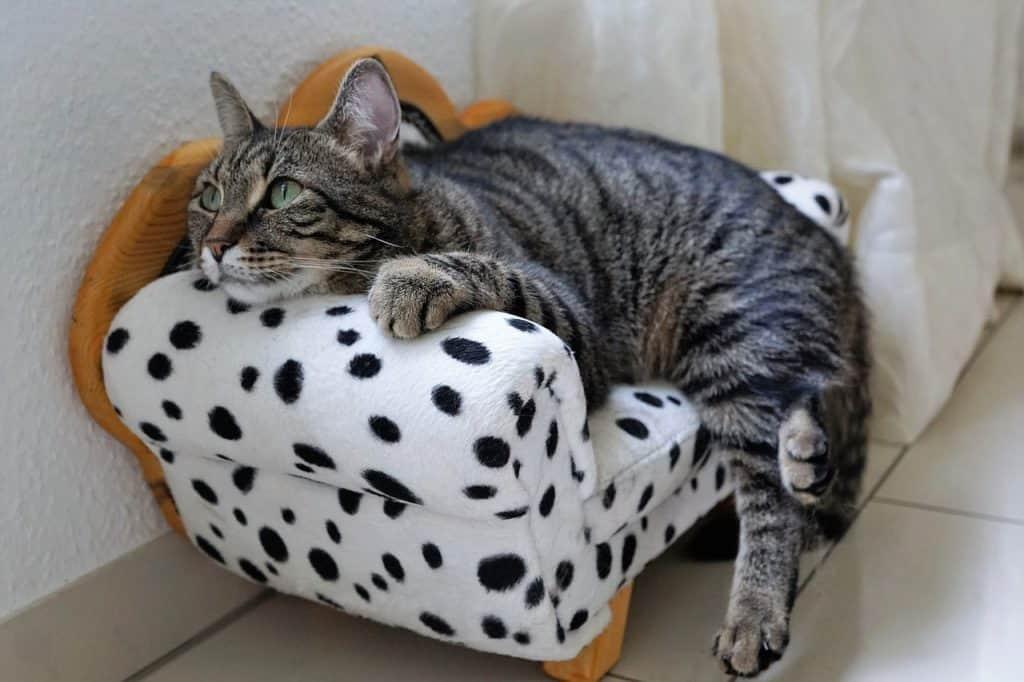Cat lying on handmade cushion