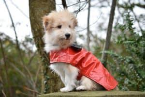 Dog wearing a red DIY pet raincoat