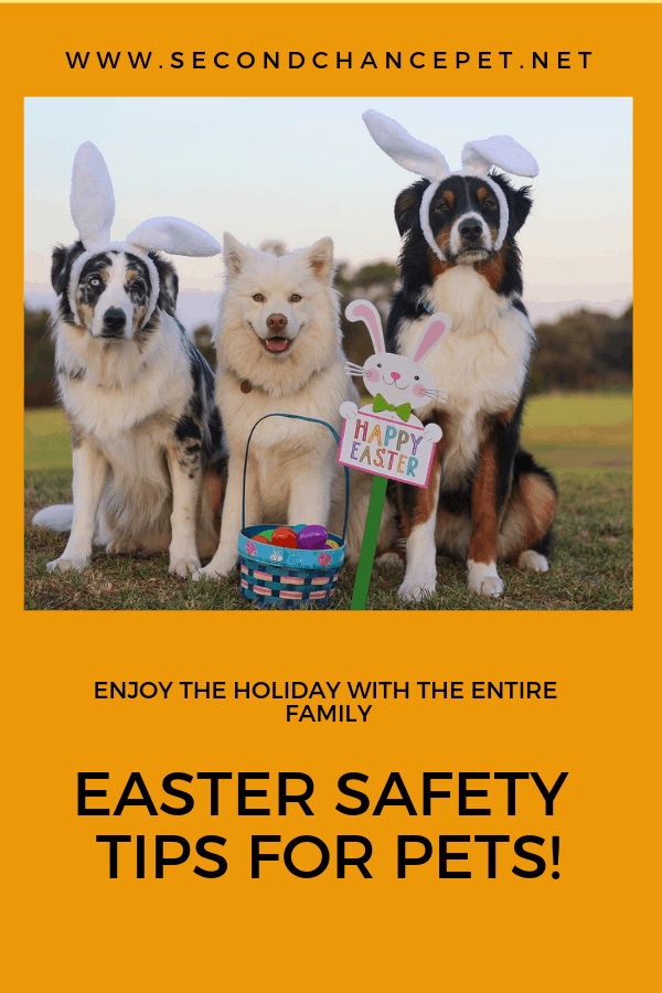 three big dogs with bunny ears and an Easter basket. Pet safety tips for Easter.