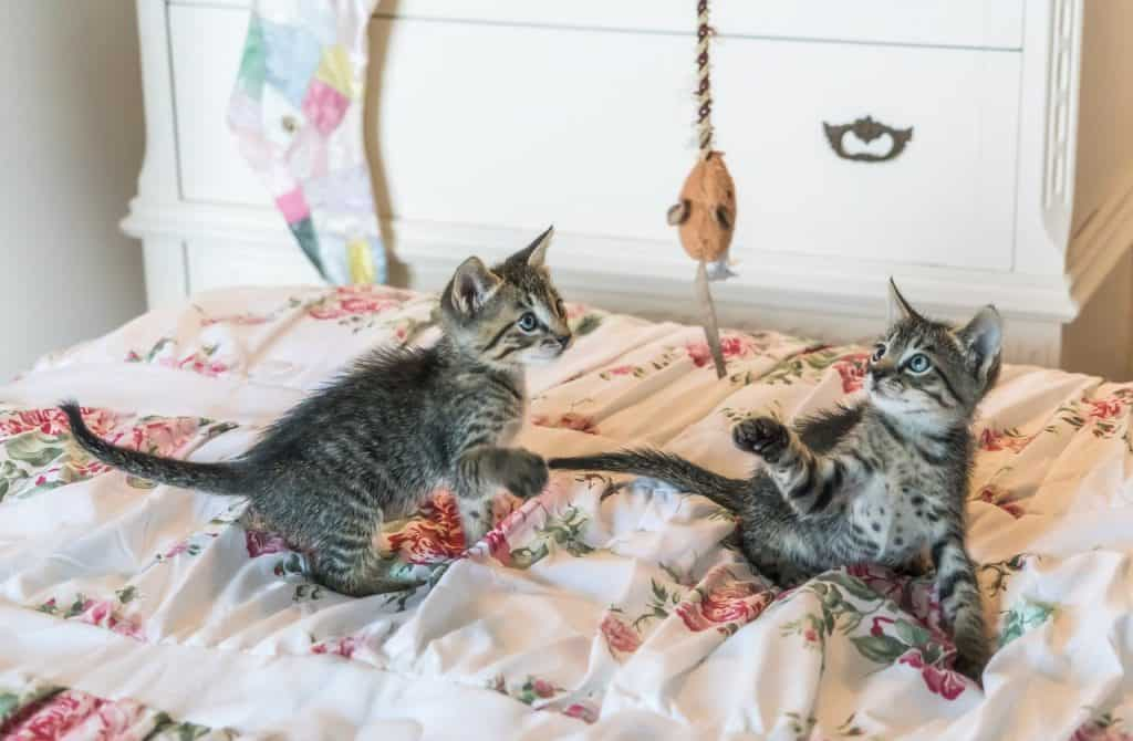 Kittens playing with a DIY pet project