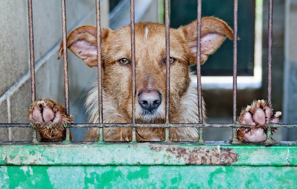Brown and white dog in a rusty cage