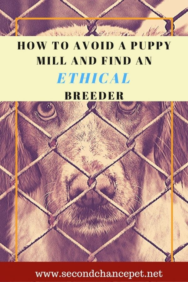 A Puppy Mill Dog behind a Fence