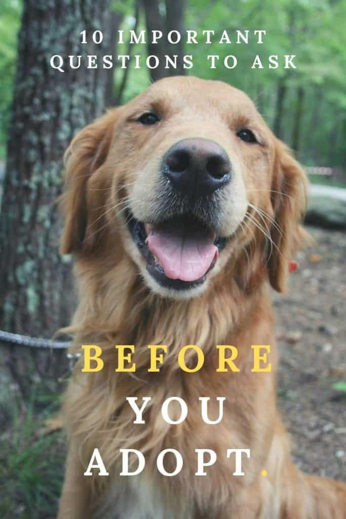 TEN QUESTIONS TO ASK BEFORE ADOPTING A DOG •
