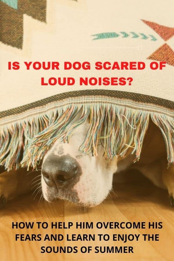 Many dogs are afraid of loud noises - thunderstorms, fireworks, etc.  Learn how to calm your dog's fears so that she can enjoy a great summer.