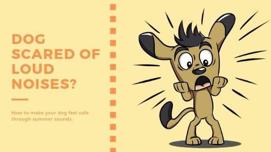 Dog Afraid of Loud Noises