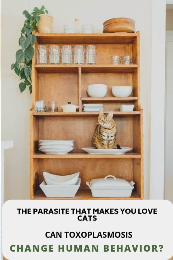 toxoplasmosis can it make you love cats?