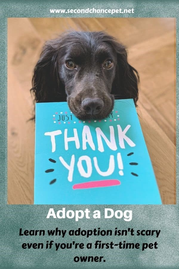 black dog holding a thank you card