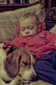 Baby sleeping beside sleeping beagle