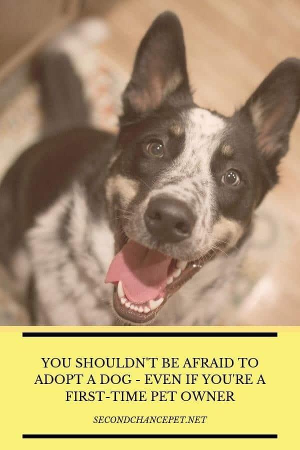"Should I adopt a dog? This smiling Shepherd says ""definitely""."