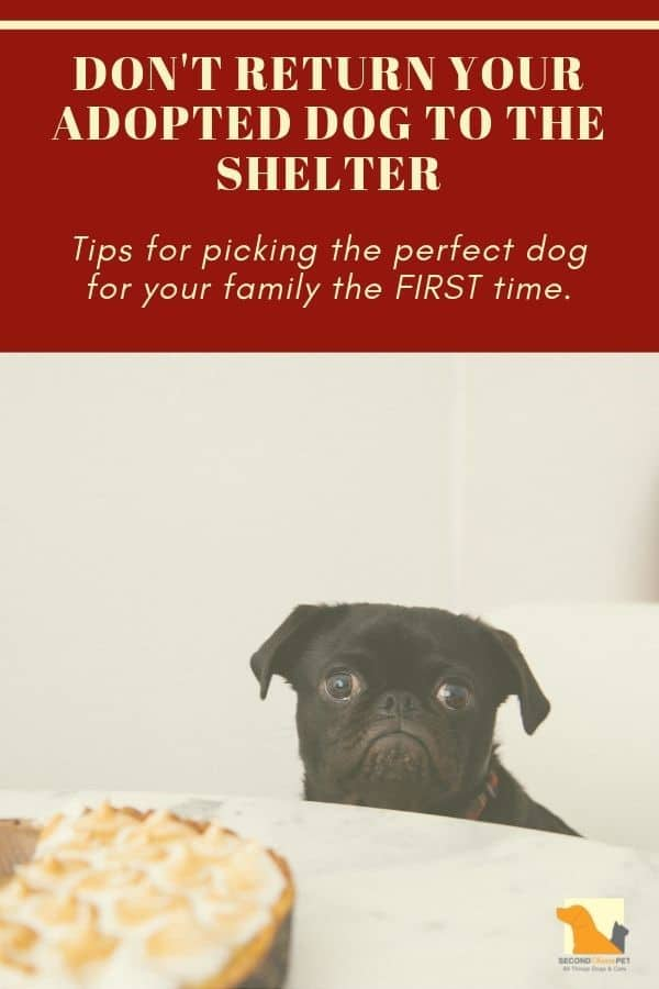 Don't Return Your Adopted Dog to the Shelter