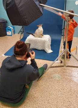 A photo session with a cat