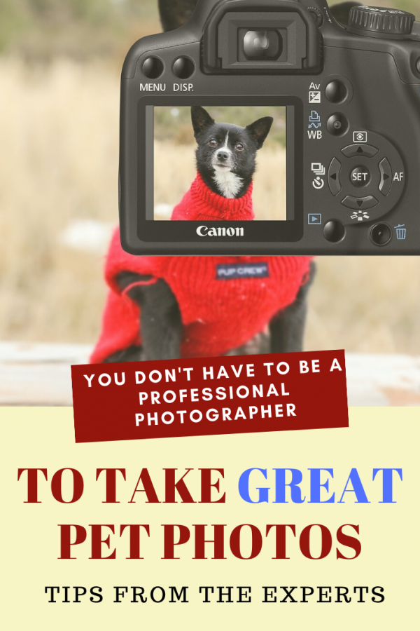 Pet Photography Tips for the Non-Professional