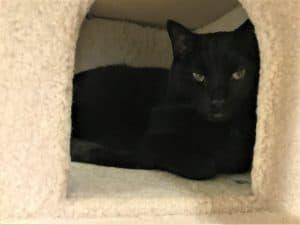 Indoor black cat hiding