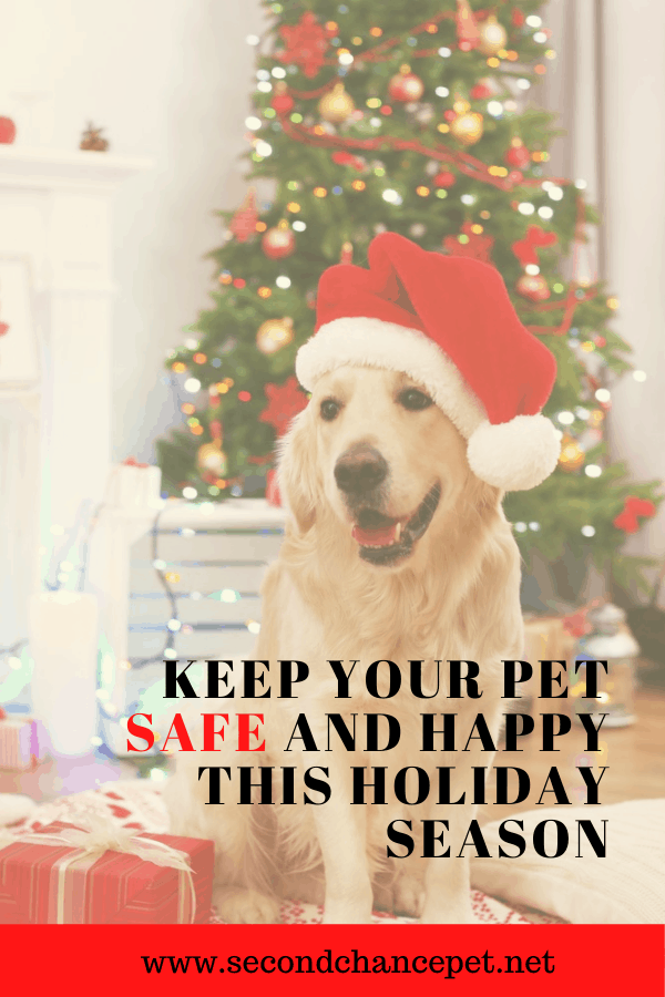 Golden Retriever wearing a Santa hat sitting in front of a Christmas Tree