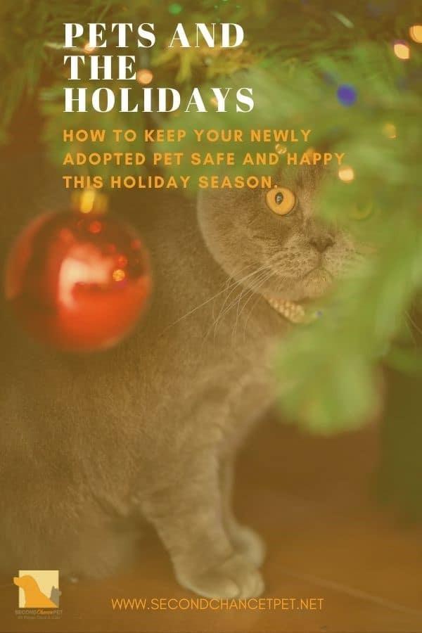 gray cat hiding among christmas ornaments