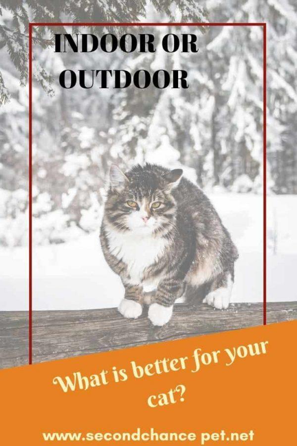 outdoor cat in the snow