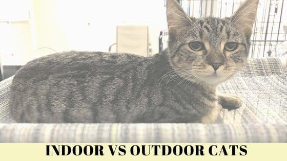 Indoor Cat in a Window Seat