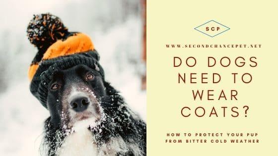 Do Dogs Need Coats?