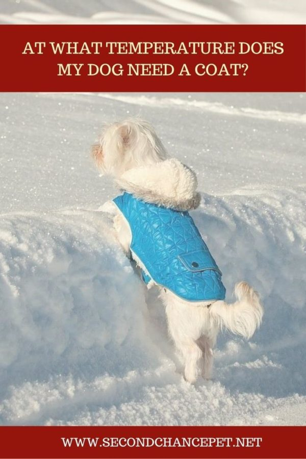 Does your dog need to wear a coat? Protect your pet from the cold.