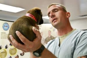 Veterinarians have jobs working with dogs.