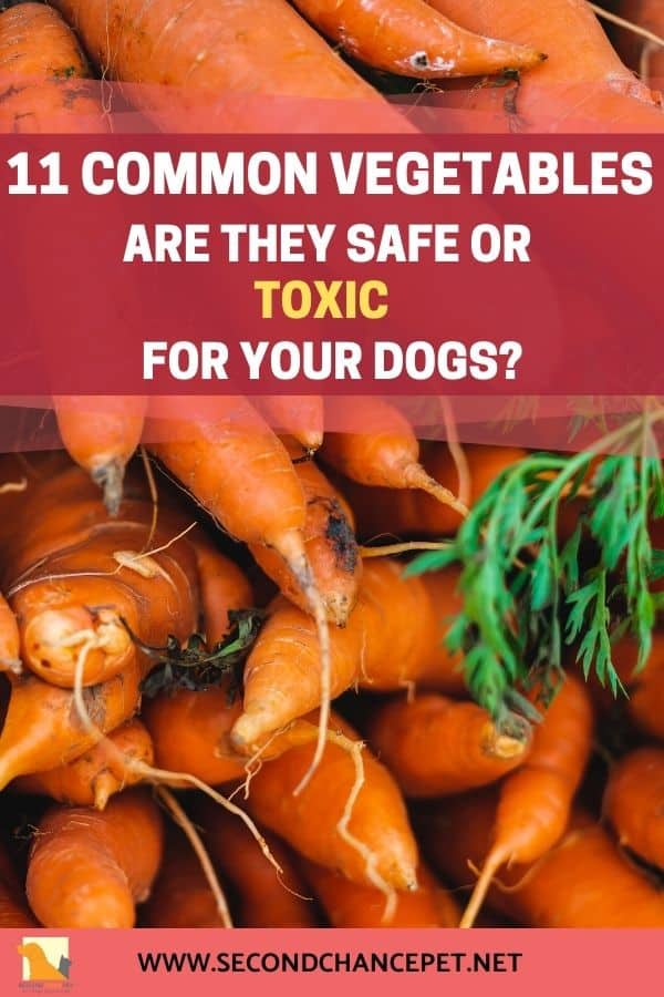 Safe and Toxic Vegetables for Your Dog