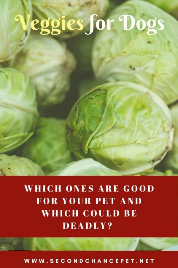 Are brussels sprouts good for your dog?