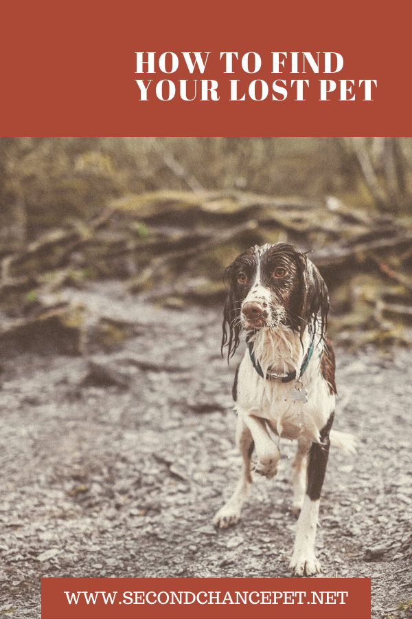 Wet Dog on Find A Lost Pet poster