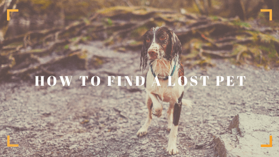 Wet black and white dog - find a lost dog