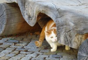 Cats often hide - how to find a lost pet