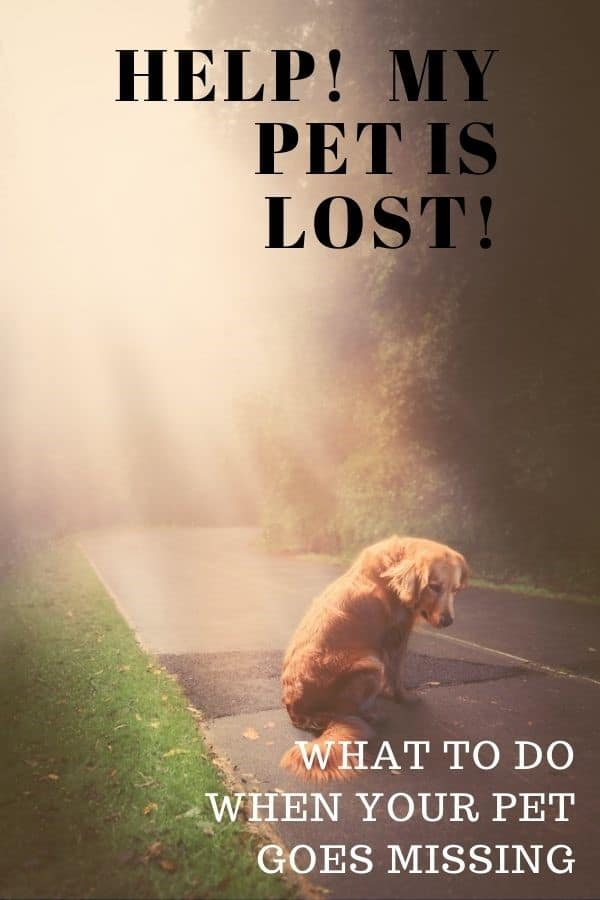 How to Find A Lost Dog - Golden Retriever looking sad sitting on a road