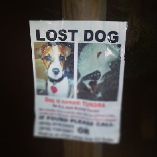A Flyer to Help find a lost pet