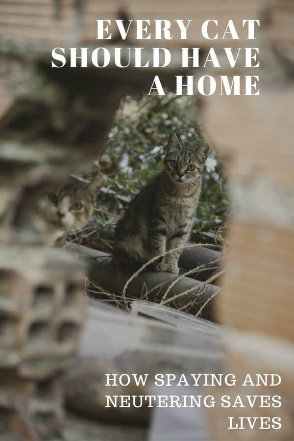 feral cats look out from behind building materials