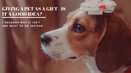 Is Giving a Pet as a Gift a Good Idea?