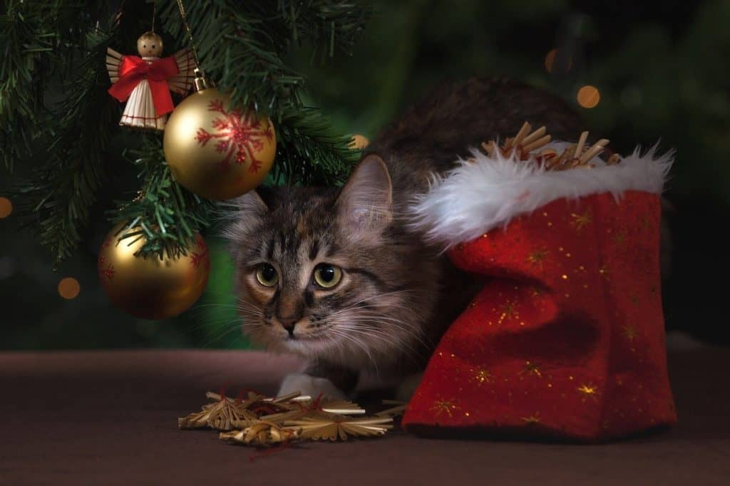Giving a Pet as a Christmas Gift is Not a Good Idea