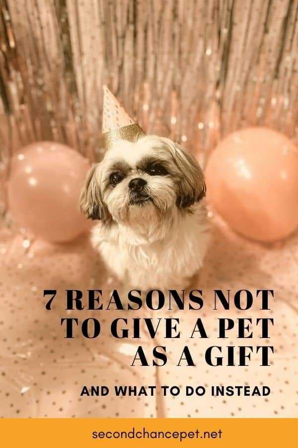 Why Giving a Pet as a Gift Isn't a Good Idea