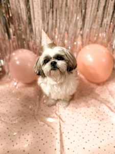 Don't give a dog as a birthday gift